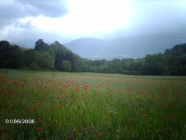 paysage de coquelicots by angeloup