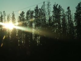 Sun Threw Trees by micro-pup