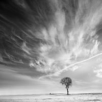 Winter no.3 by anoxado