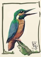kingfisher speedpainting by inkfloyd