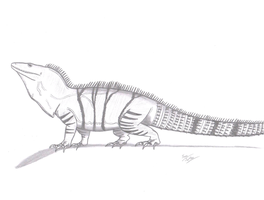 Ctenosaura similis by KingEdmarka