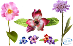 +Flowers  - PNG by lifeblue