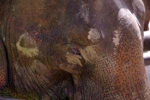 Eye of the Elephant by MudgetMakes