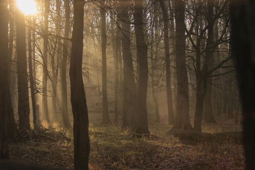 Forest 14 by landkeks-stock