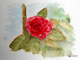Camelia rouge by manette64