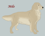 Milo by Windhaven-Kennel