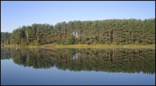 Trees in lake by axis5