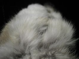 Rabbit Fur 32 by TRANS4MATICA
