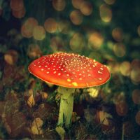 Infected mushroom by Oragerie