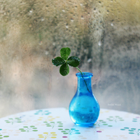 my first lucky clover by popoks
