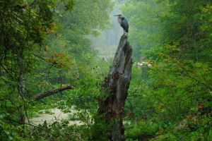 Early Morning Visitor Near the Towpath Trail by JJonesJr69