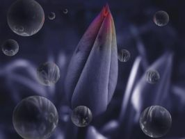 Tulip in bud by velar1