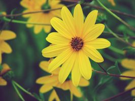 Yellow Flower by gendosplace