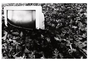 monitor in leaves by homedoggieo