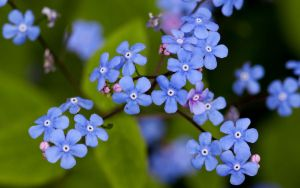 Forget me not I by Bozack