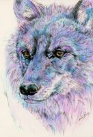 Wolf by ohmindflowers