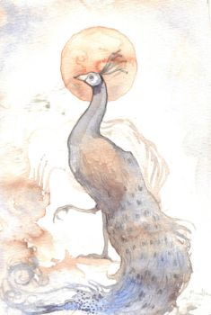 peacock by plutonia
