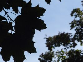 Leaves Silhouette by Meow-Stock