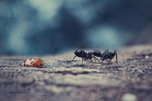 Mr. Bug and the Ants by Goliath-Artistry