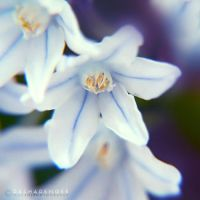 :FORGET ME NOT 2: by onixa