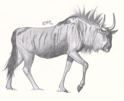 Wildebeest by CamStatic