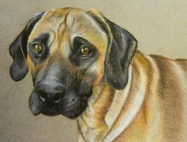 Dog Chalk Portrait by ChalkyCanvas