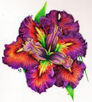 Louisiana Iris by LadyMignonette