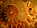 Beautiful Fossil by Rockhounds