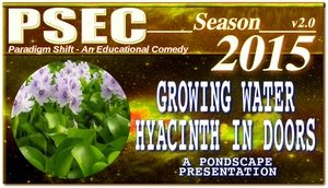 PSEC 2015 Pondscape Growing Water Hyacinth In Door by paradigm-shifting