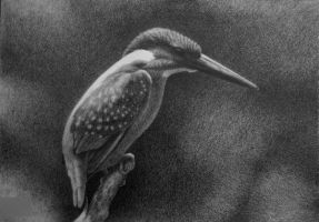 Alcedo atthis, pencil by Panthera11