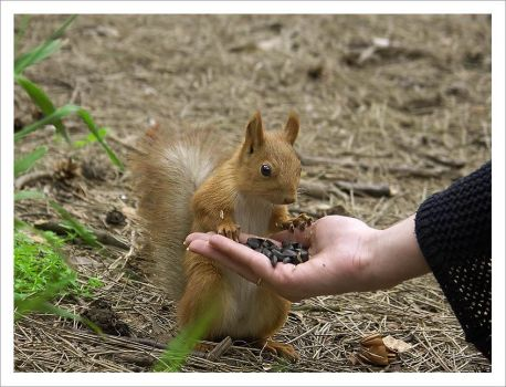 another squirrel by PeterThePan