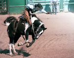 Rodeo7-2014 by Lonewolf-Eyes