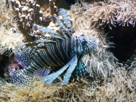 Epic Lionfish by dreamingshadow18