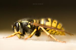 The Wasp by DREAMCA7CHER