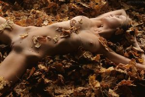 Autumn Leaves by artofdan70