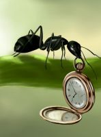 ant of time by Trutze