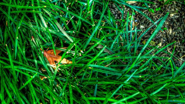 Leaf in the Grass by Reginhild