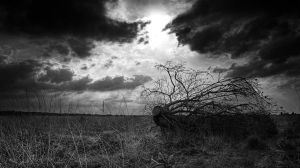 lost by lomax-fx