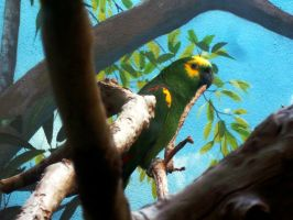 Green Macaw by WolfieMaster
