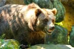 Grizzly smile! by PhotoDragonBird