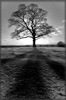 bw_tree by damo3sp