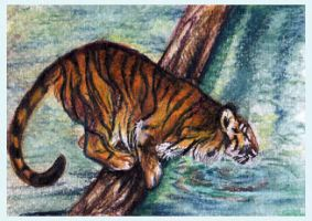 ACEO Tiger by Amadoodles