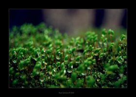 Nature 4 by onyx