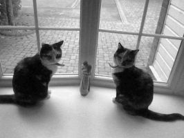 My Cats by Sophisticaition