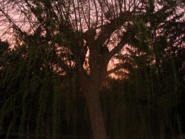 Weeping willow by mzelBulle
