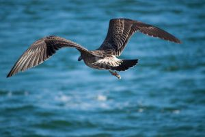Flying Sea Bird Stock by CNStock