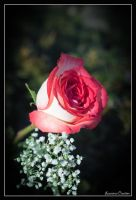 Every Rose has its Thornes by LawrenceCreation