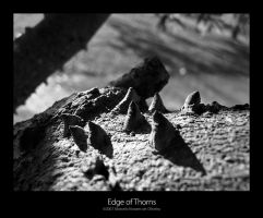 Edge of Thorns by KDEWolf