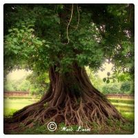 The Roots 01 by MarcoPhotos