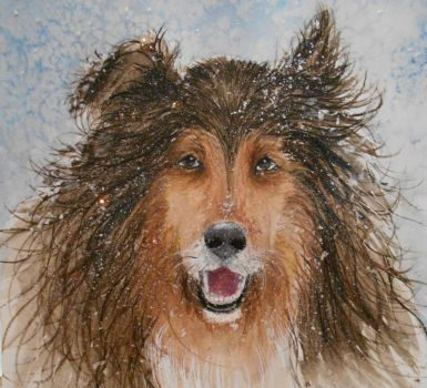 Winter Sheltie by tiletable